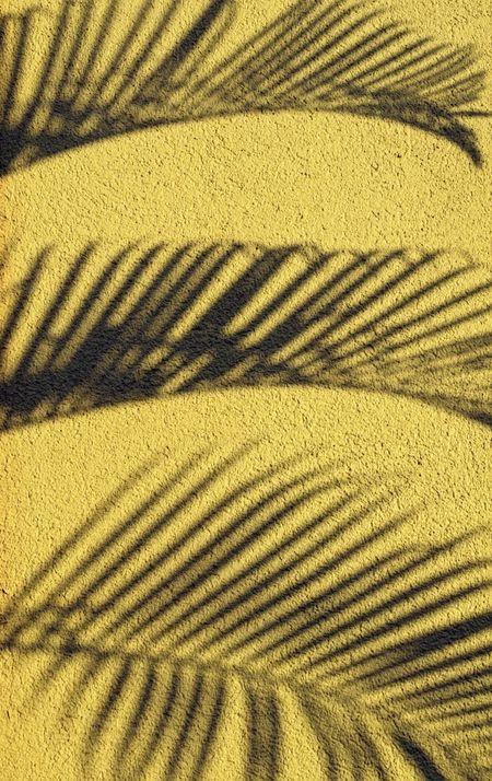 Shadows of tropical palm on stucco wall at sunset, Big Island of Hawaii
