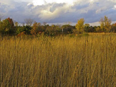 Autumn landscape: Prairie restoration near sunset, northern Illinois