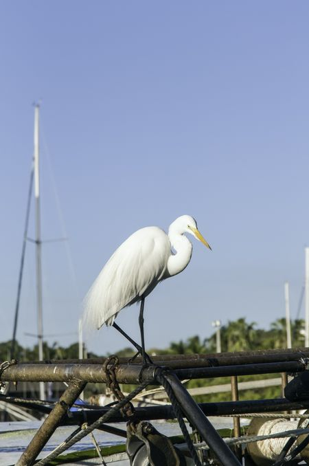 Environmental portrait of egret on fishing boat in Miami marina