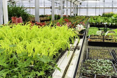 Horticulture at a glance: Plants flourish in the controlled environment of a large greenhouse in spring, northern Illinois, USA