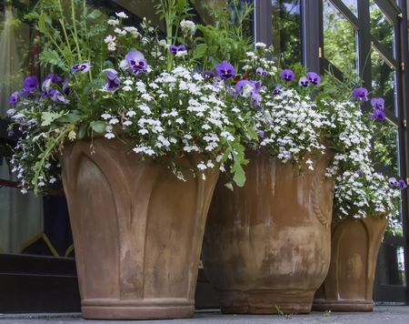 Similar floral arrangements in three flower pots in front of museum, spring in northern Illinois, USA