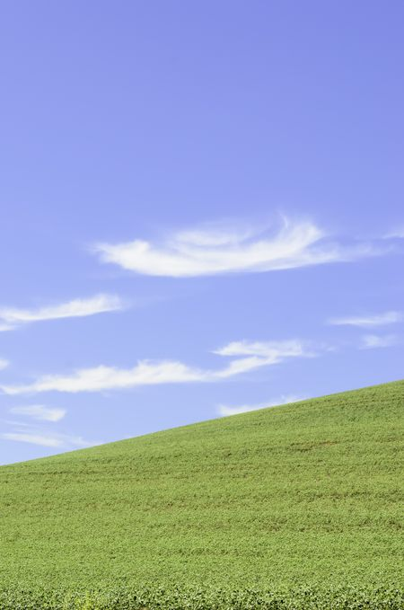 Green field of wheat in springtime on hillside under cirrus clouds in blue sky