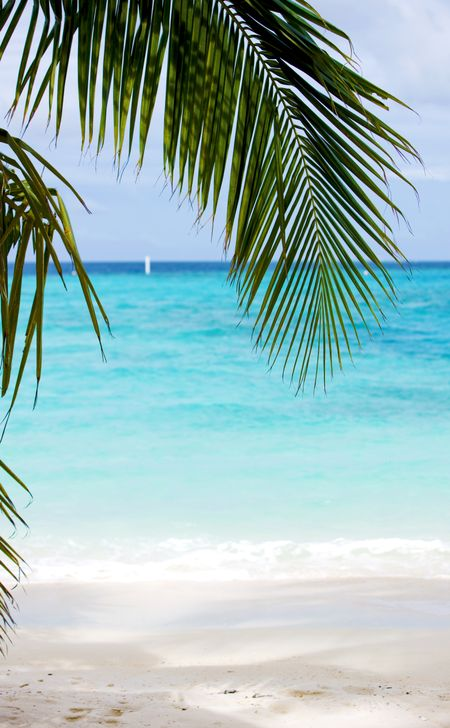 beach background on a beautiful place with a palmtree leave at the top