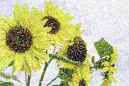 Pointillist abstract of sunflowers (binomial name: Helianthus annuus) in summer garden
