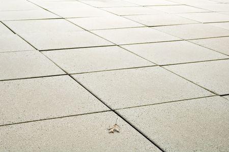 Oak leaf on patio of concrete squares