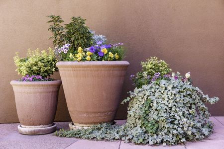 Arrangement of desert flowers in three pots, one with overflowing creeper, by exterior wall approximately the same color as the holders