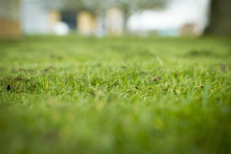 Freshly cut grass detail