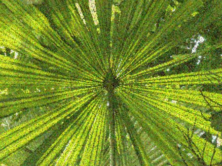 Pointillist abstract of radial palm leaves for themes of origin and symmetry in nature