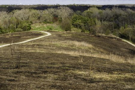 Charred hillside after a controlled burn in spring, with new growth beginning, in a forest preserve in northern Illinois, USA