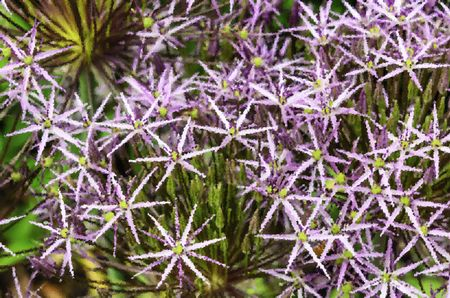 Crystallized abstract of Star of Persia onion (binomial name: Allium christophii), an ornamental garden plant, for decoration and background with motifs of nature, spring, horticulture