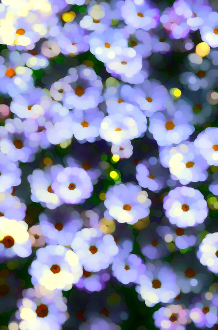 Varicolored abstract of flowers in summer garden, for decoration and background