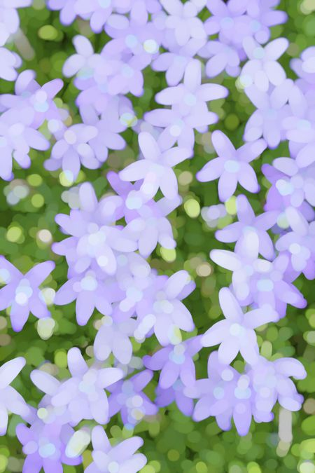 Abstract of Gemini blue star creeper (possible binomial name: Pratia pedunculate, Laurentia fluviatilis, or Isotoma fluviatilis) early in summer, northern Illinois, for decoration and background
