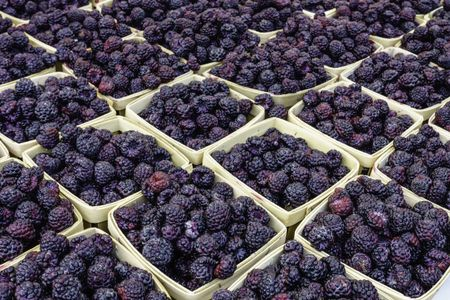Black raspberries (binomial name: Rubus occidentalis) for sale at farmer's market, early July in northern Illinois