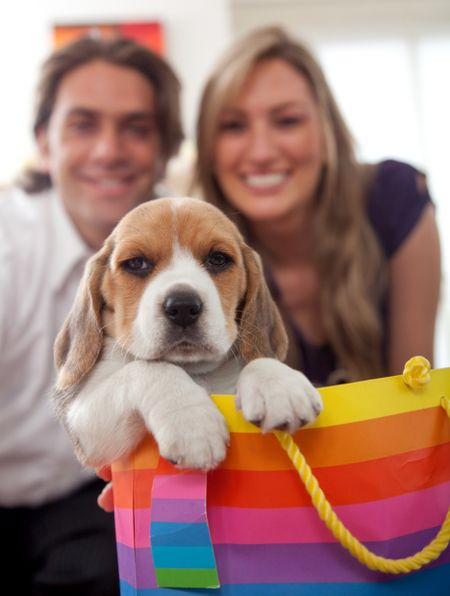 Beautiful puppy in a gift bag with a couple