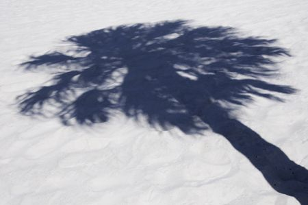 Shadow of palm tree on white sand