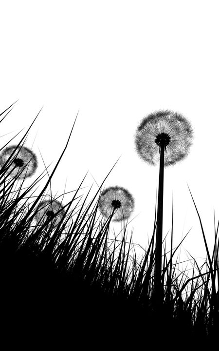 black and white illustration silhouette of grass and dandelions flowers