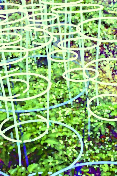 Impressionist abstract wire support rings, glowing like neon hoops, for growth of tomatoes and other plants in spring garden