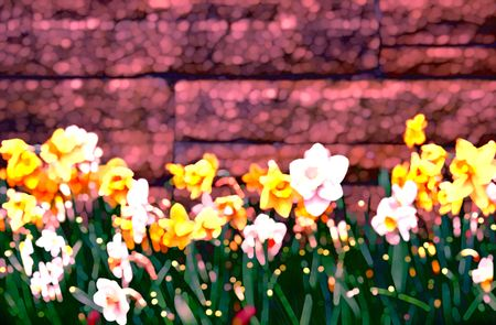 Multicolored abstract illustration of daffodils by garden wall in springtime