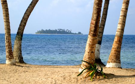 beautiful caribbean beach in Colombia - focus is on the palmtrees in the foreground
