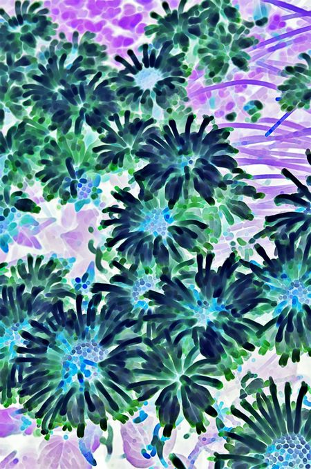 Inverted abstract of wild bergamot (binomial name: Monarda fistulosa) for garden or nature motifs in decoration or background (one of a series)