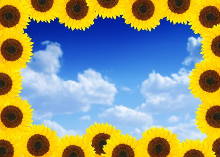 Beautiful sunflower frame with the sky in the background