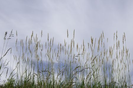 Prairie grass at top of hill