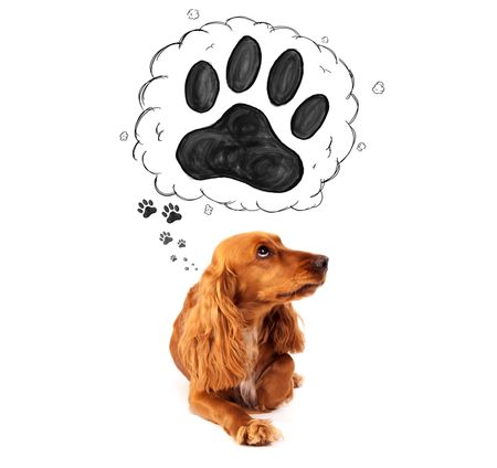 Cute cocker spaniel thinking about a paw in a thought bubble above her head