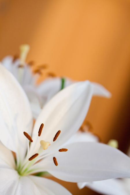 Beautiful couple of lilies with an orange background