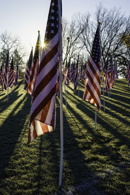 American flags with sun flare and long shadows early on an autumn morning three days before the Veterans Day federal holiday