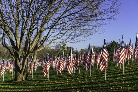 Display of many American flags for observation of Veterans Day, with long parallel shadows and bare tree in public park on early November morning