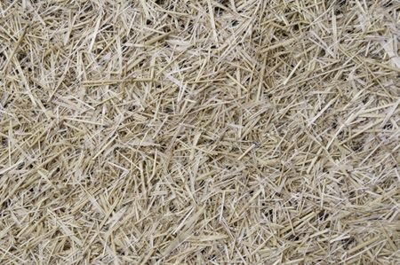 Lawn repair: straw held in place with fine mesh netting hides grass seedlings