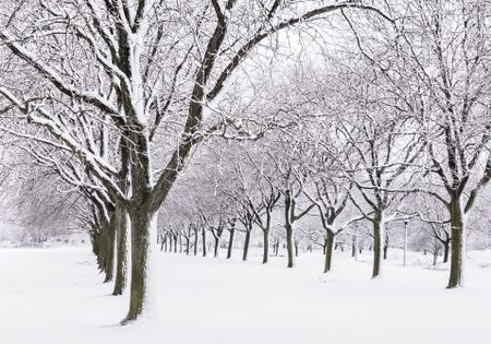 Quiet avenue of trees after a snowstorm: An aspect of winter more agreeable to many than what they often see on newscasts