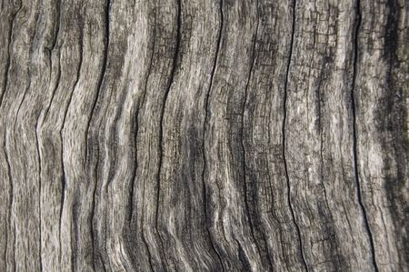 Pattern of bark on old log, full-frame close-up