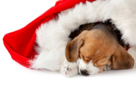 Puppy as a gift in a christmas hat isolated