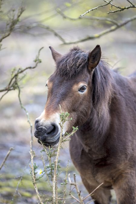 Wild ponies on marshland in Springtime