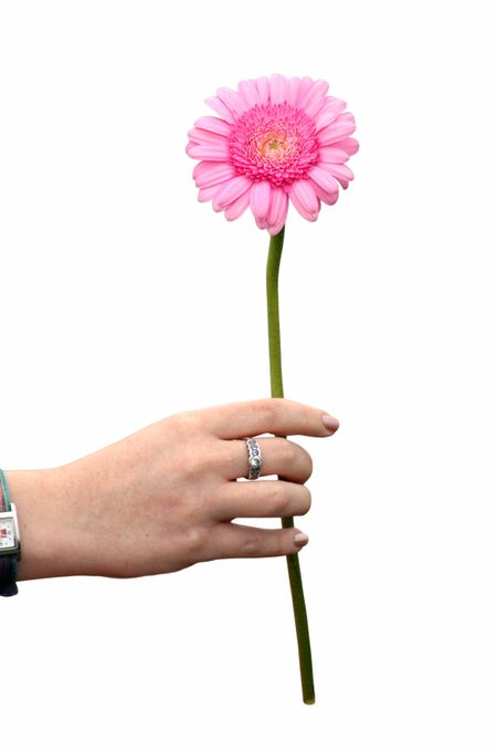 pink daisy being handed over by a womans hand