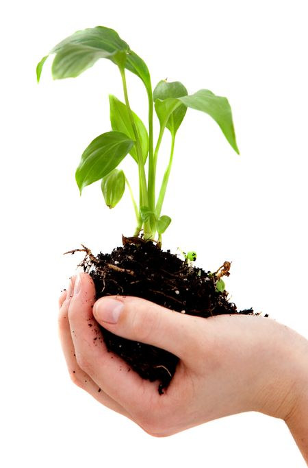 Hand holding a plant isolated over a white background