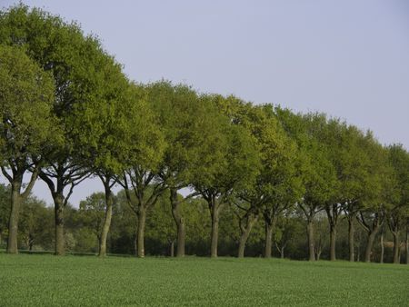 trees in germany
