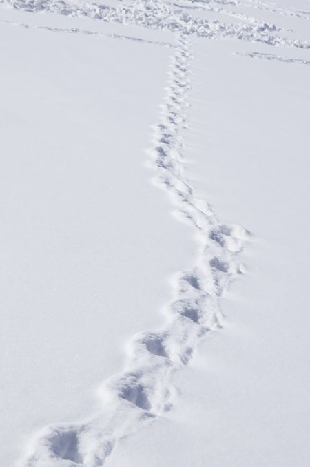 Single path of footprints across snow joins many others in the distance