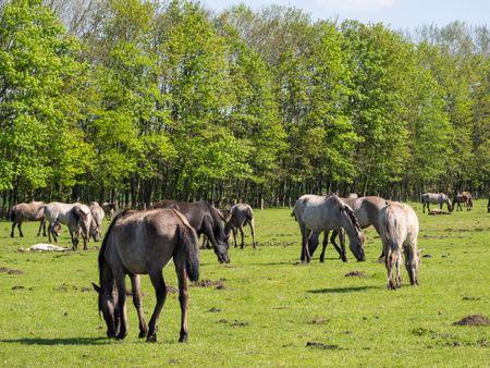 horses in germany