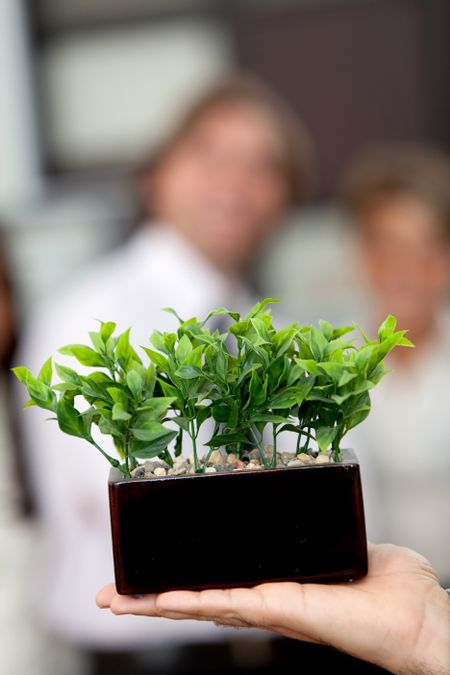 Man holding a tree at the office - Environment friendly business concepts