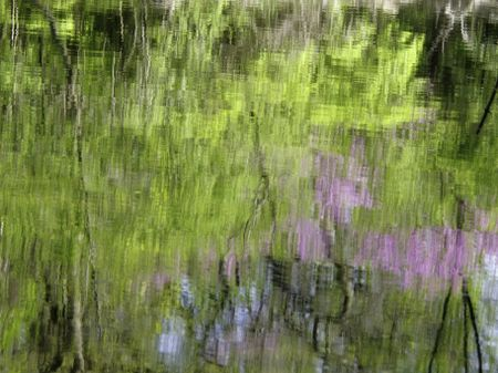 Distorted reflections of trees along bank of slow river in springtime -- abstract, background, or seasonal motif