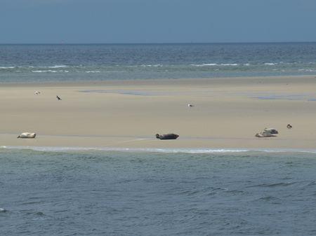 the Island borkum
