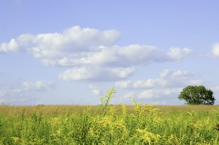 Illinois prairie late in August (focus on goldenrod in foreground)