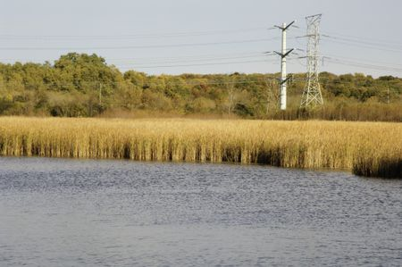 Environmental landscape in mid October, with lake and reeds in foreground and transmission towers in forest preserve in northern Illinois