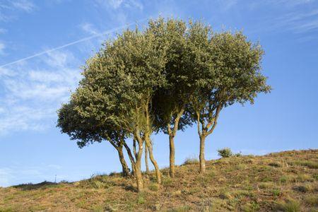 Trees in Medulas, Leon, Spain