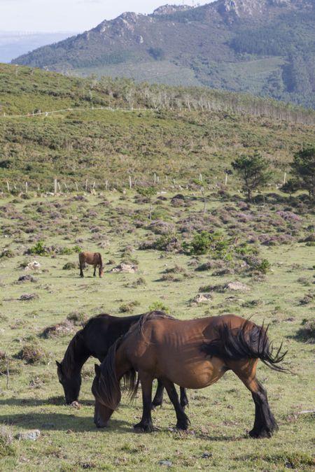 Horses at Vixia Herbeira Cliffs; Ortigueira; Spain