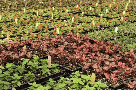 Plants galore in greenhouse arrangement