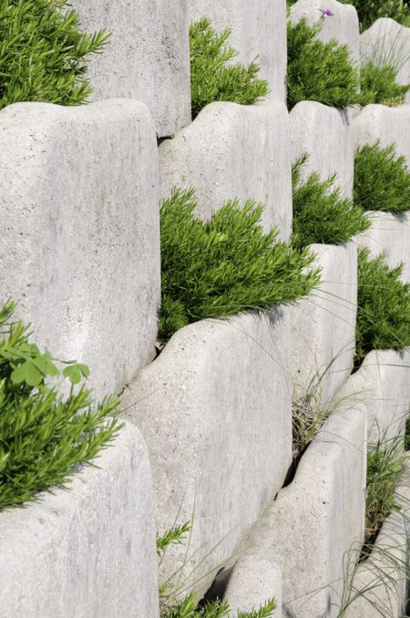 Garden retaining wall of white landscaping blocks with greenery at interstices
