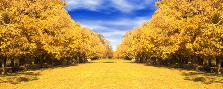 autumn view in greenwich park